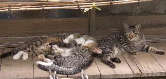 threecats2